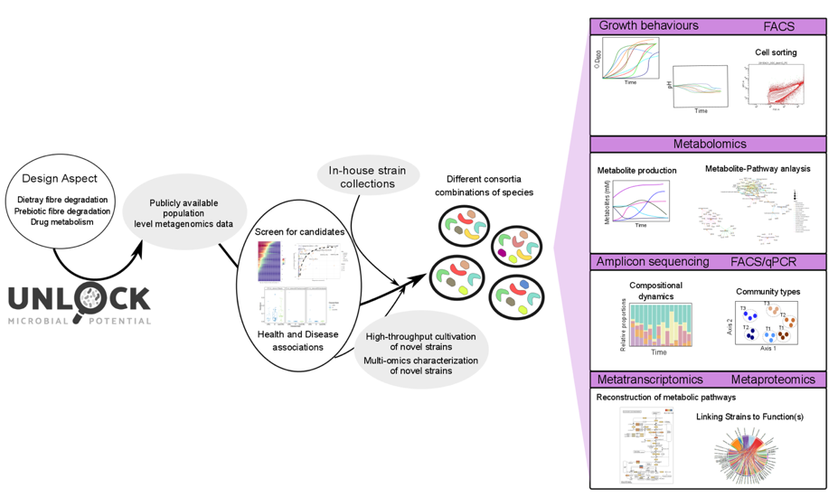 The Biodiscovery Platform – Case study 1: Synthetic gut microbiome